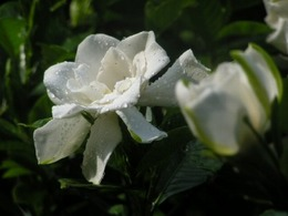 PICT0912